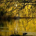 Golden-lake