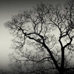 WintEr silhouettE by lostknightkg