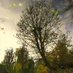 Autumn Illusion..