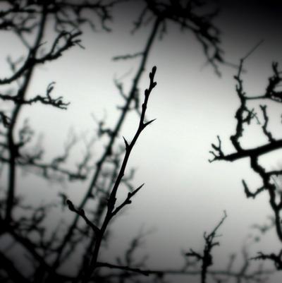 Thorns by lostknightkg