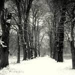 Snow woodlands