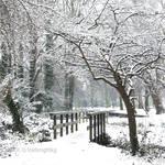 Silver gardens II
