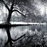 Silver gardens III by lostknightkg