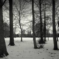 Ravensbury woods by lostknightkg