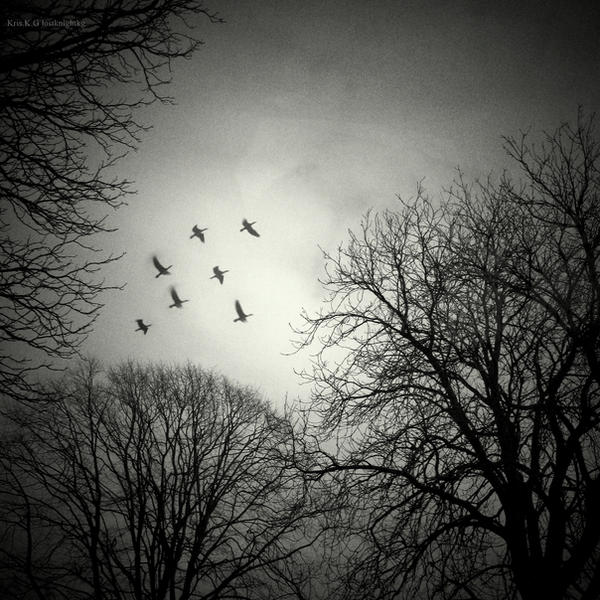 Winter sky II by lostknightkg
