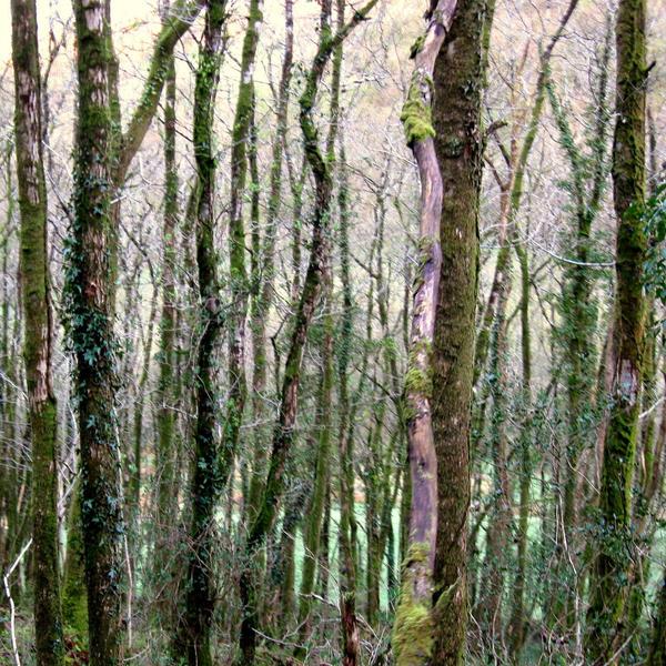 Welsh  Woods, by lostknightkg