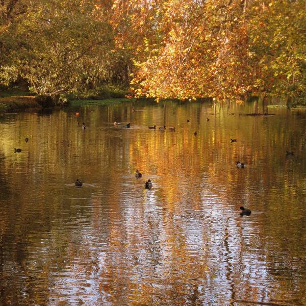 Autumn river II by lostknightkg