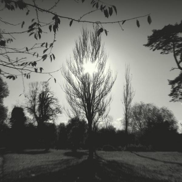 Winter tree III by lostknightkg