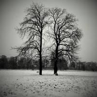 Tree twins by lostknightkg