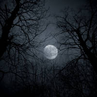 January Moon by lostknightkg