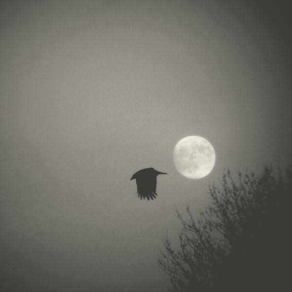 Raven Moon by lostknightkg