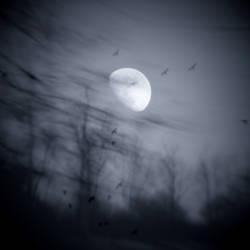 Lunar Echoes II