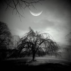 Moon Willow