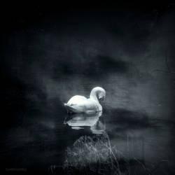 Winter Swan by lostknightkg