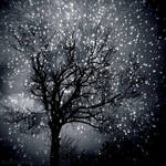 Winter Spell
