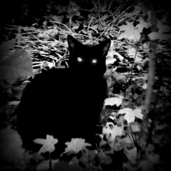 Midnight Cat by lostknightkg