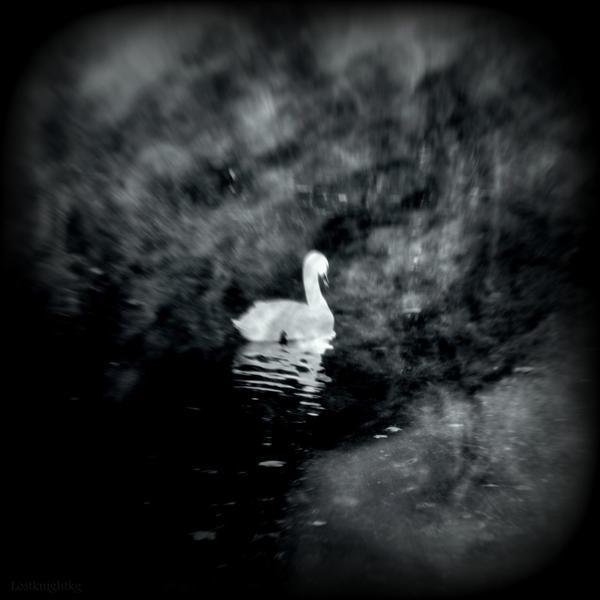 Swansong by lostknightkg