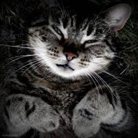 Soulful cat by lostknightkg