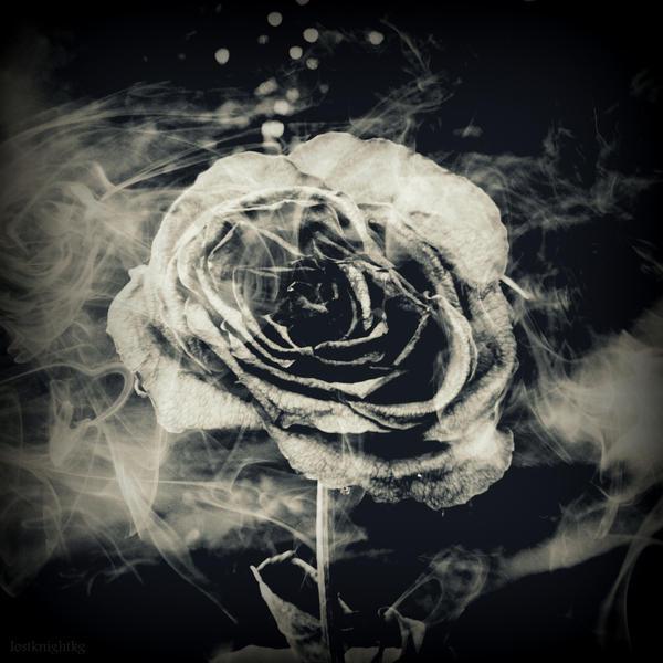 Untitled Rose by lostknightkg