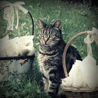 Wedding cat by lostknightkg