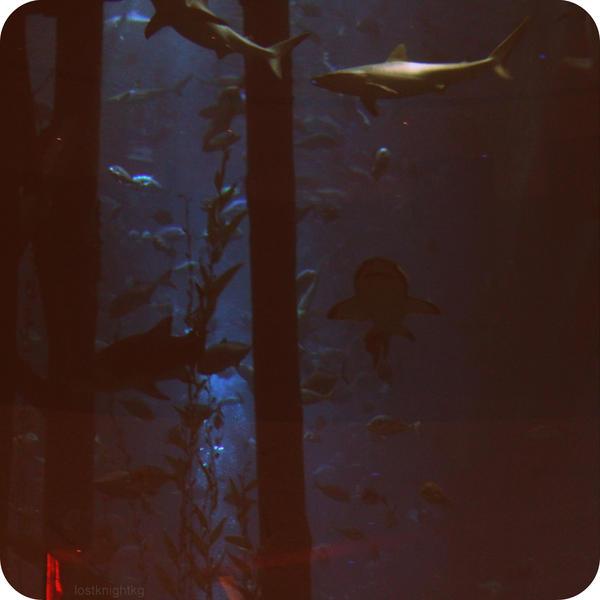 Dubai Aquarium by lostknightkg