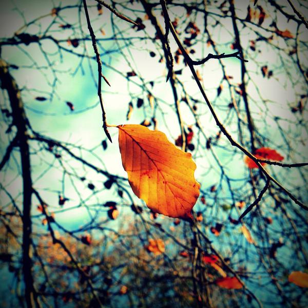 Autumn Birthday by lostknightkg
