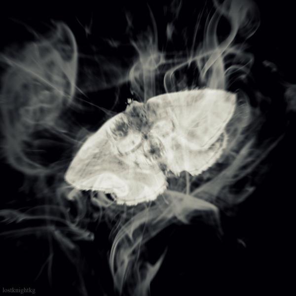 Doom moth by lostknightkg