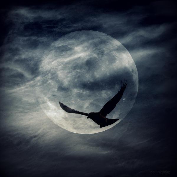 Raven Moon III by lostknightkg