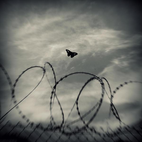 Flutter II by lostknightkg