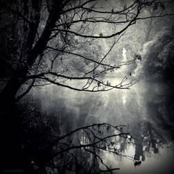 River mists by lostknightkg