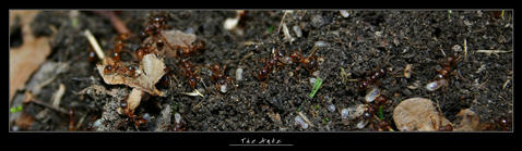 Ants by Alphamind