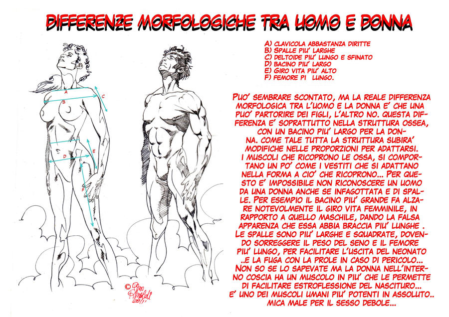 Differenze morfologiche uomo donna 1 by PinoRinaldi