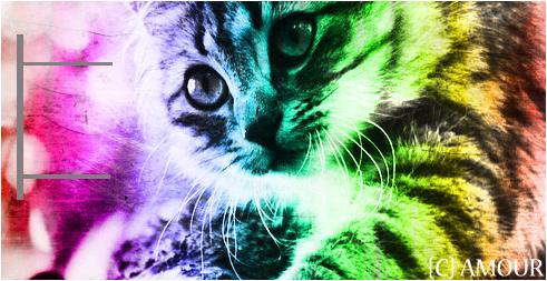 Rainbow cat by amourmazing