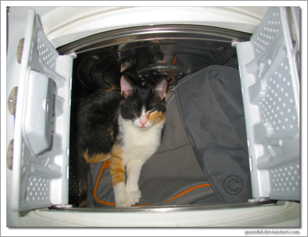 cat in the washing machine by gosiekd