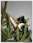 treecat 1