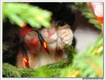 treecat 3