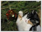 treecat 5