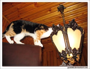 furry light bulb