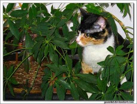 my cat among flowers