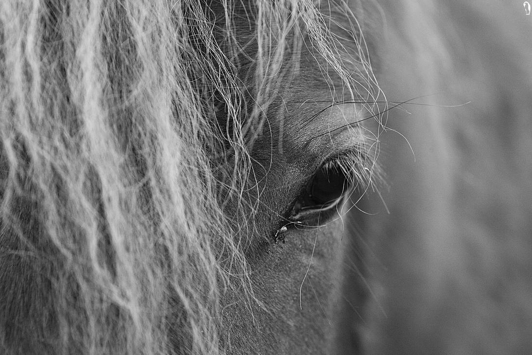 -Equine- by PenguinPhotography