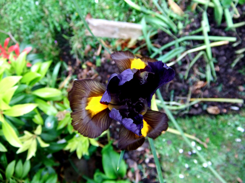 Iris by 3starlight98