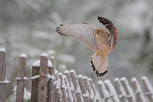 Flying under the snow
