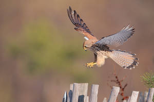good landing guys by phalalcrocorax