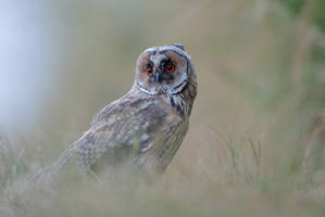 The cute side of birds of prey by phalalcrocorax