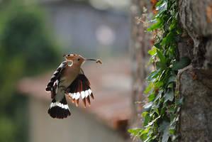 Urban wildlife 2 by phalalcrocorax