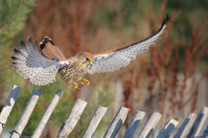 Falcon punch by phalalcrocorax