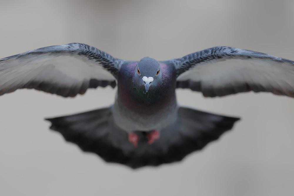 Closeup by phalalcrocorax