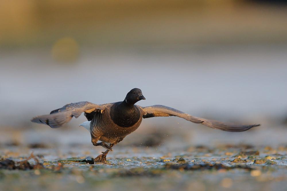 Birdy party by phalalcrocorax