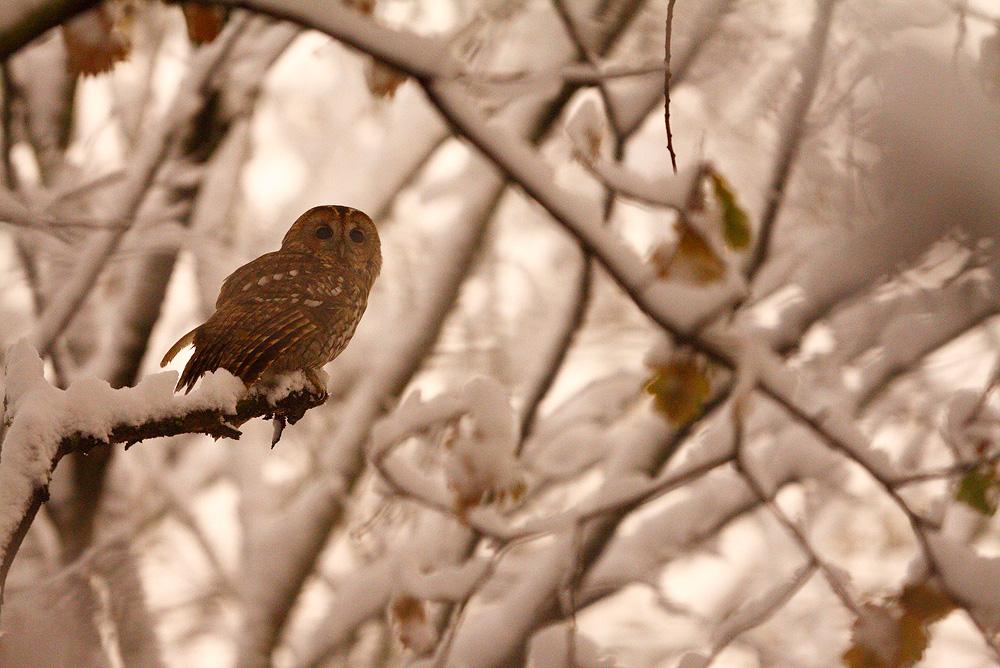 Let it snow ! by phalalcrocorax