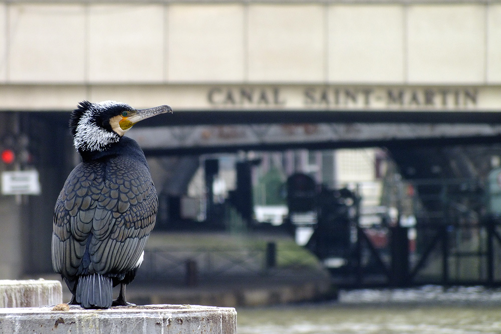 Canal parisien by phalalcrocorax